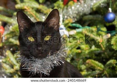 Tiny black cat wearing silver tinsel, with Christmas tree background - stock photo