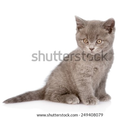 tiny cat looking at camera. isolated on white background