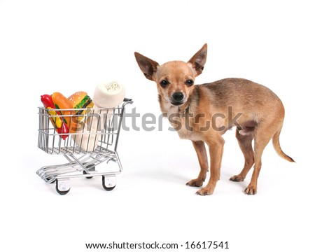 tiny chihuahua with a shopping cart