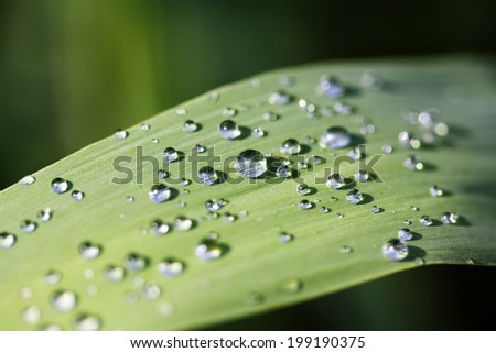 Tiny drops of water on a green leaf reflect the world around - stock photo