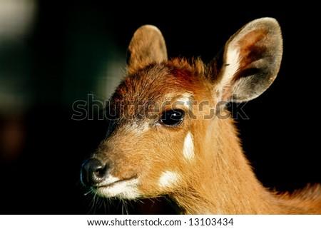 Tiny fawn head closeup - stock photo