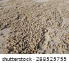 Tiny ghost crab created small sand balls while digging its burrow. - stock photo