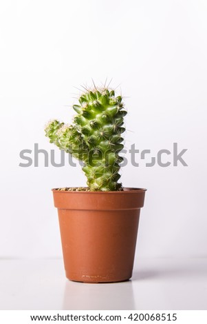 Tiny green cactus plant on a brown pot isolated on a white background