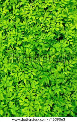 Tiny green leaves background. - stock photo