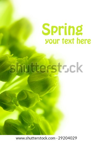 Tiny green maple flowers on a white background.  Macro with shallow DOF. Copyspace with easily removable text - stock photo