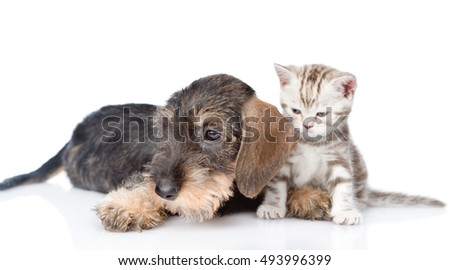 Tiny kitten and puppy lying together. isolated on white background
