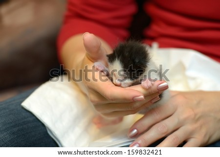 tiny orphan kitten in woman hands - stock photo
