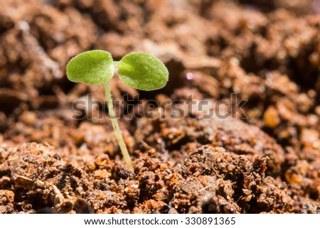 tiny plant growing and starting new life  - stock photo