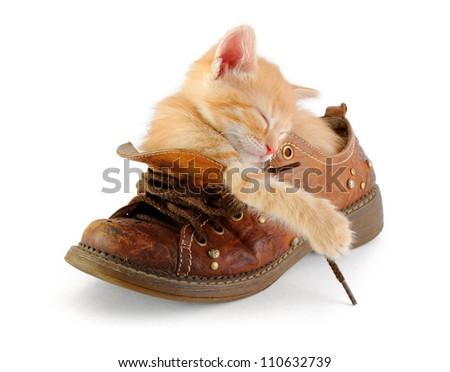 tiny red kitten sleeping in old boot - stock photo