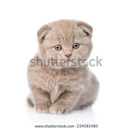 Kitten keeps standing in poop