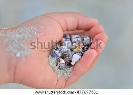 Tiny seashells in the palm of a child