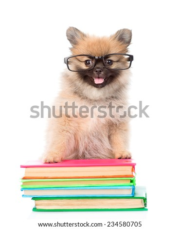 tiny spitz  puppy with glasses standing on a books. isolated on white background - stock photo