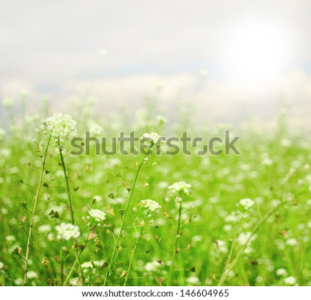 Tiny spring flowers with shallow depth of field  - stock photo