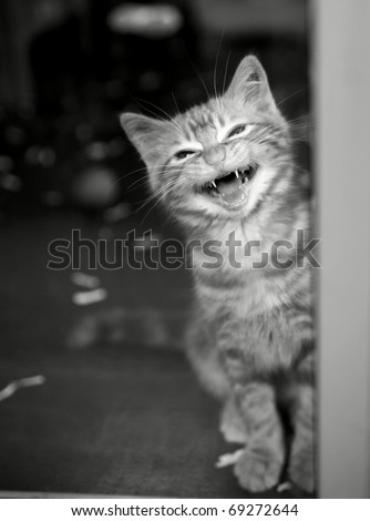 Tiny tabby kitten looking up through the open door of his cage meowing - stock photo