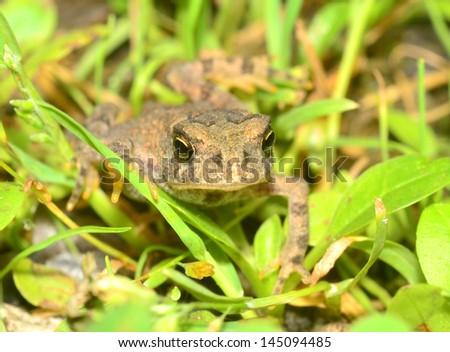 Tiny Toad - stock photo
