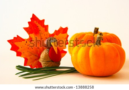 tiny turkey meets mini pumpkins - stock photo