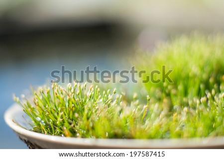 Tiny water grass - stock photo