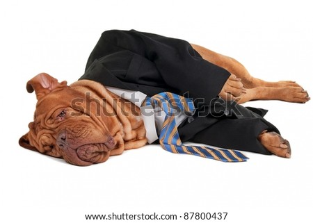 Tired dog businessman is having a rest  on the floor - stock photo