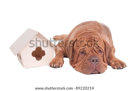 Tired dog is lying next to a starling house - stock photo