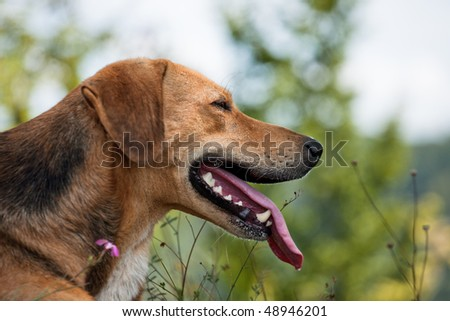Tired dog laying in grass - stock photo