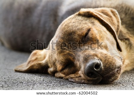 Tired dog sleeps in a street - stock photo