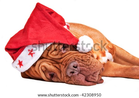 Tired Dogue de bordeaux with a starry Santa's hat isolated on white - stock photo