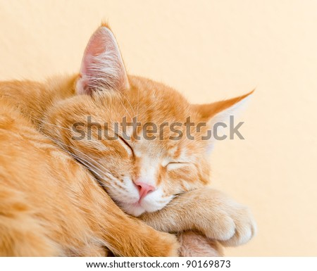 Tired ginger cat resting in the afternoon - stock photo