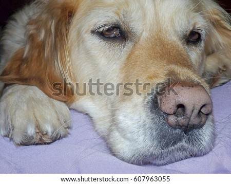 Droopy Stock Images Royalty Free Images Amp Vectors