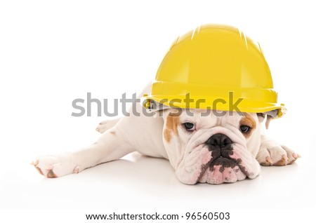 Tired Lazy Bulldog Wearing a Yellow Construction Hard Hat - stock photo