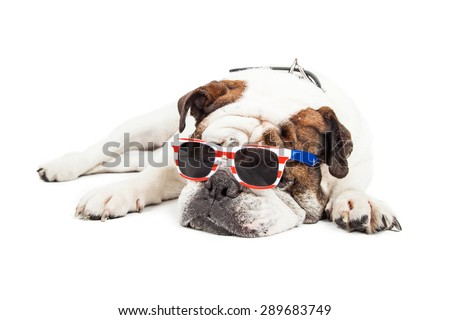 Tired old Bulldog breed dog laying down while wearing red, white and blue American themed sunglasses - stock photo
