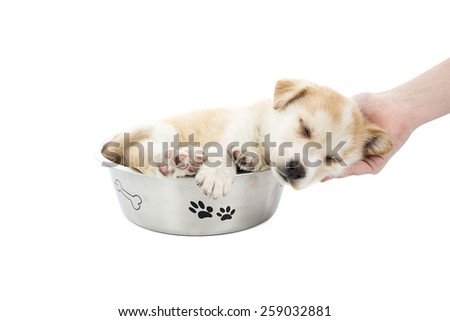 Tired puppy dog sleeping in a food bowl against a white background - stock photo