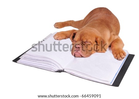 Tired puppy fall asleep lying on documents folder, isolated - stock photo