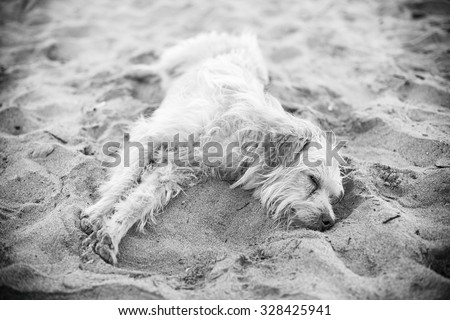 Tired stray dog sleeping on the sand. Black and white. - stock photo