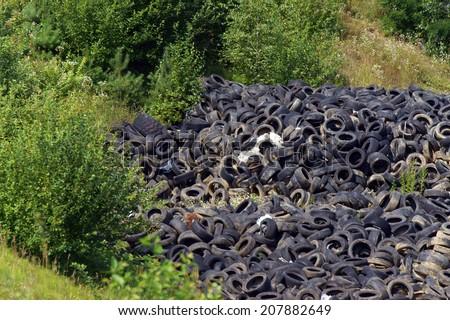 Tires Dump     - stock photo
