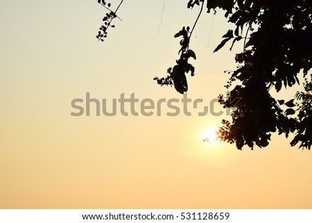 Title : The tree and sunshine