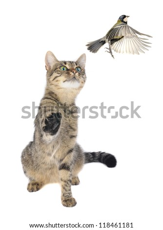 Titmouse and cat on a white background - stock photo