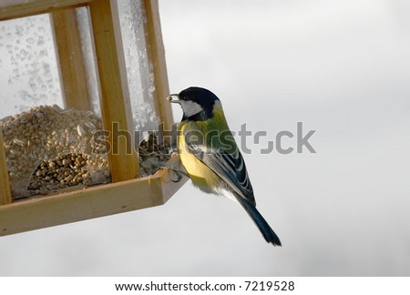 Titmouse eating from the bird feeder in winter - stock photo