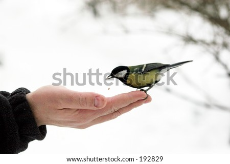 titmouse on hand
