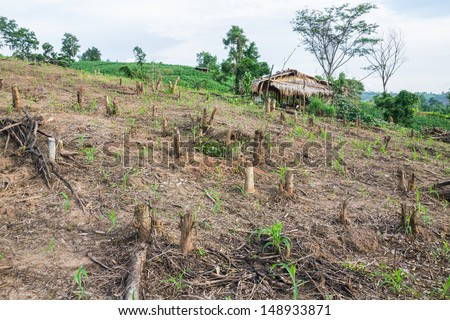 To clear the forest for agriculture - stock photo