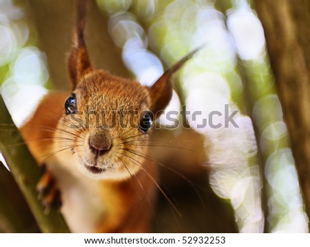 To feed a squirrel to take a nut - stock photo