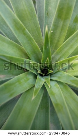 to view of agave plant, naature concept - stock photo