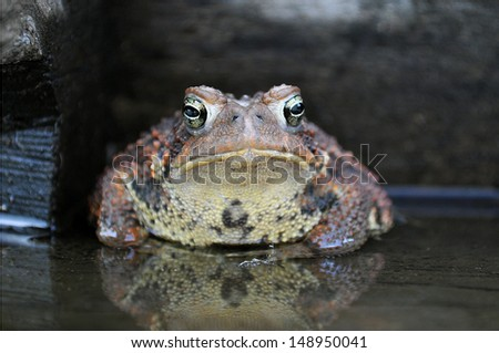 Toad - stock photo