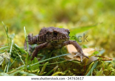 Toad in grass - stock photo