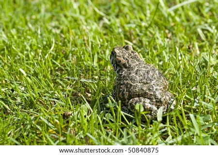 Toad in the grass. - stock photo