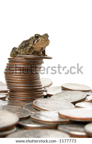 Toad on Quarters - stock photo