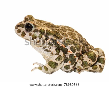 Toad on white background and texture,