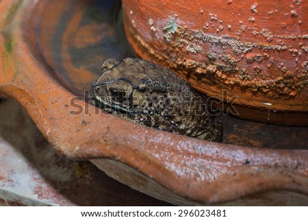 Toad, sitting on a pots of tree