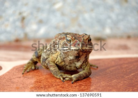 Toad standing on the tiles. - stock photo
