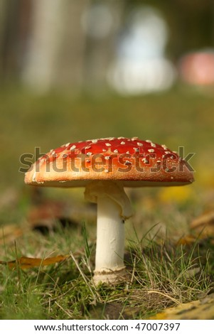 Toadstool - stock photo