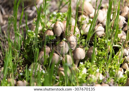 toadstool mushrooms nature spring